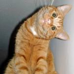 dzień kota Budapeszt