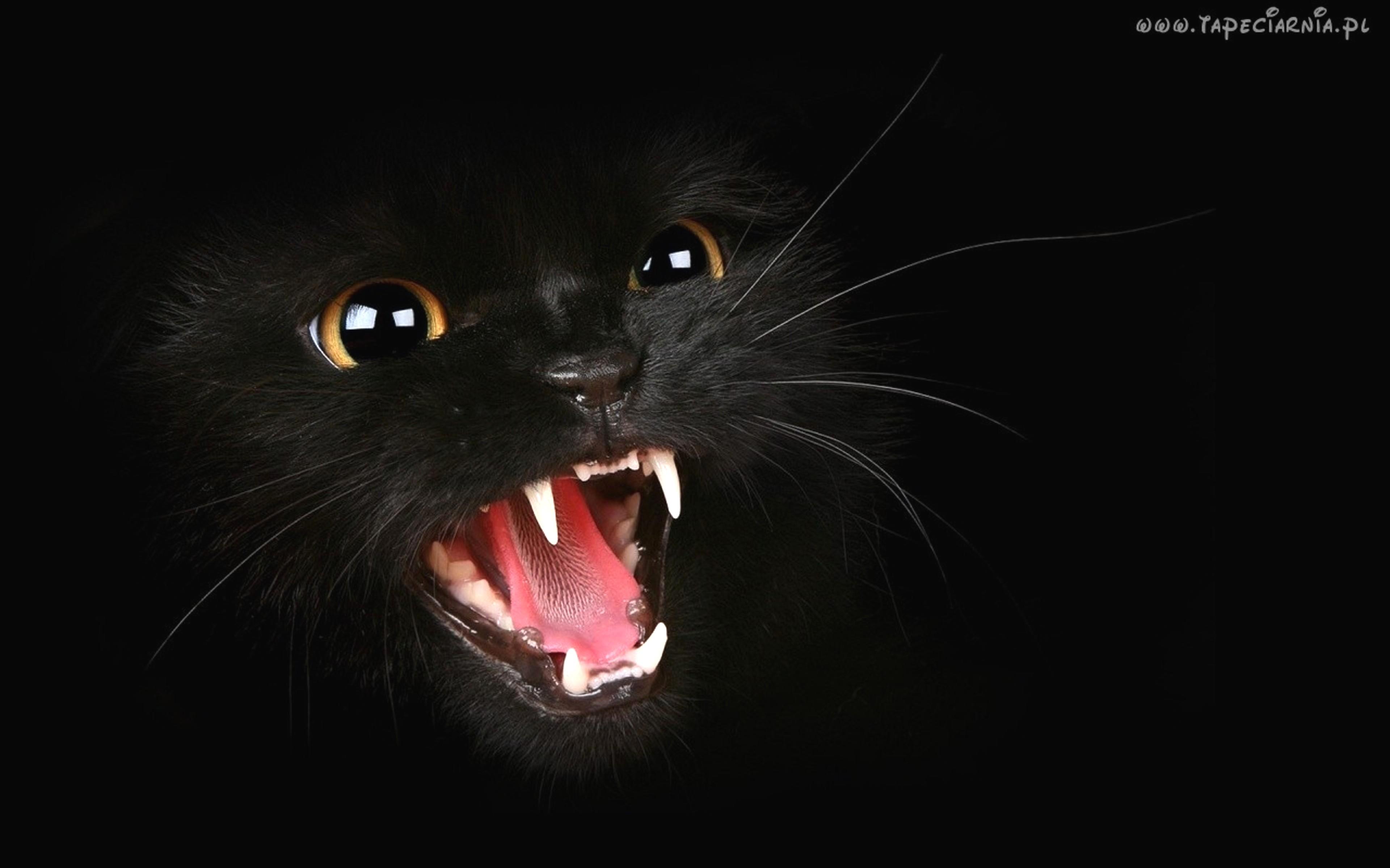 Чёрный с большим дерет белую 7 фотография