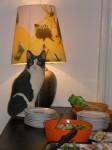 kot na dniu kota