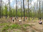 polski las w Budapeszcie